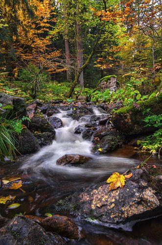 Autumn Harz Mountain van Steffen Gierok