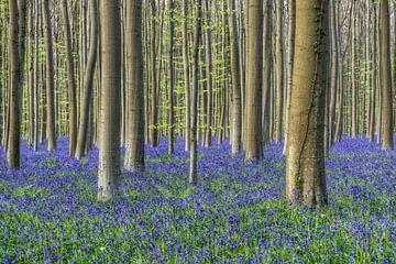 Magisch blauw bos van Michael Valjak