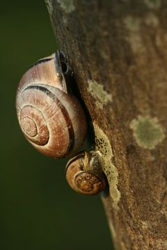 Two Snails van Ariska Bonnema