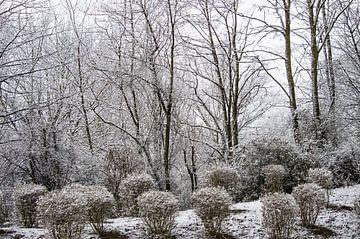 winter wonderland van Dennis Klaassen