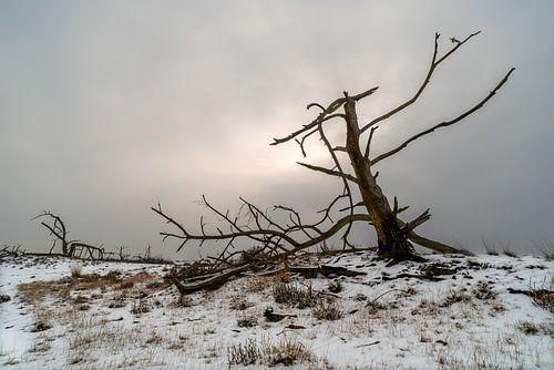 Dode boom van Gonnie van de Schans