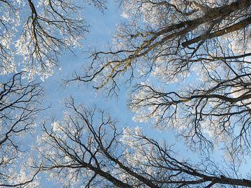 Winter indruk - besneeuwde bomen van Katrin May