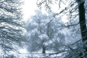 boom doorkijk van