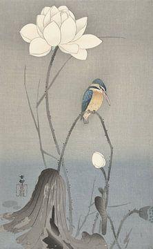 Eisvogel sitzend auf gebogenem Stiel in der Nähe der weißen Lotusblume von Ohara Koson