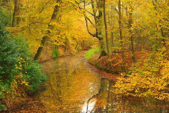 Bos met gele bladeren in de herfst