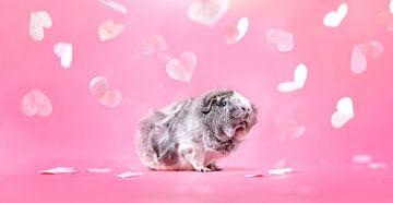 Meerschweinchen-Herzen von Marloes van Antwerpen