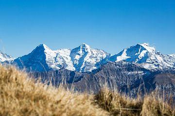 Warme en koude kleuren in de herfst in de Zwitserse Alpen van Hidde Hageman