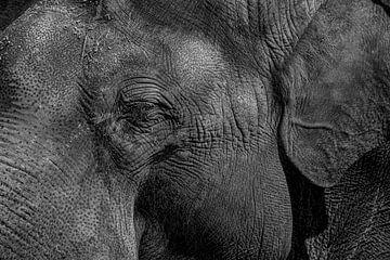 Afrikanischer Elefant, Porträt in Schwarz-Weiß von Gert Hilbink