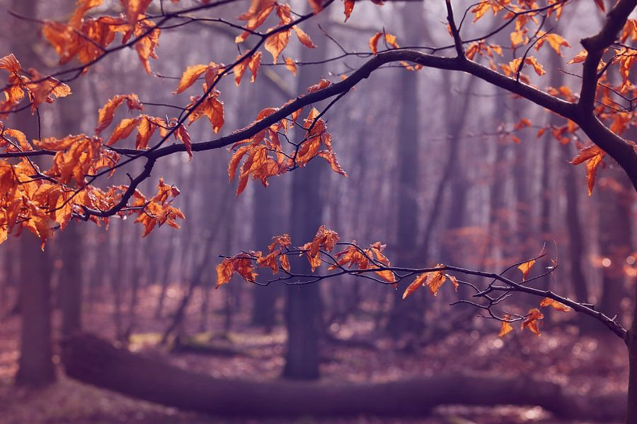 The last leaves.. van LHJB Photography
