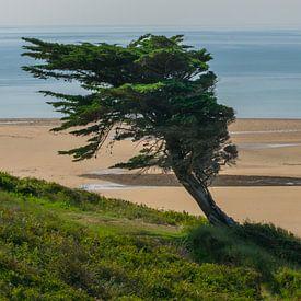 Surrealistischer Baum am Strand bei Carteret, Frankreich von Patrick Verhoef