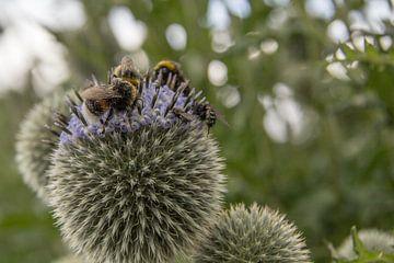 Bijen van Pamela TTW