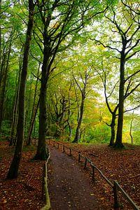 Herbstwald an der Küste van