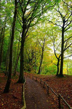 Herbstwald an der Küste van Ostsee Bilder