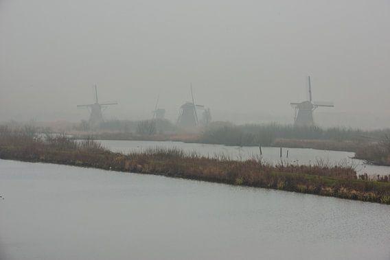 windmolens langs de kinderdijk in de mist