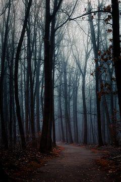 Ein nebliger Wald in der Dunkelheit von Jamesrl Photography