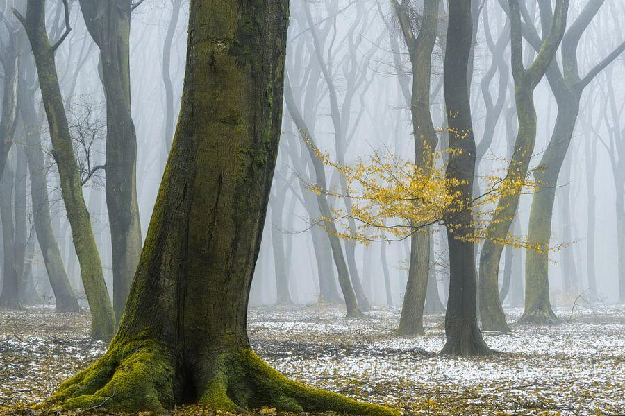 Winterkleuren van Lars van de Goor