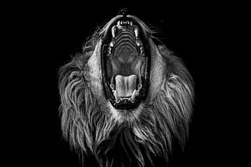Afrikaanse leeuw met open bek (zwarte achtergrond) van Daphne van Dam