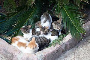 Katzenparadies von t.ART