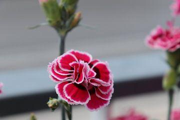 spaanse bloem van emma de winter