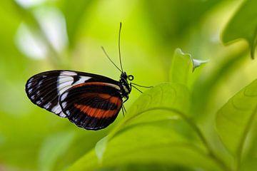 vlindertje in het groen von Bart Hardorff