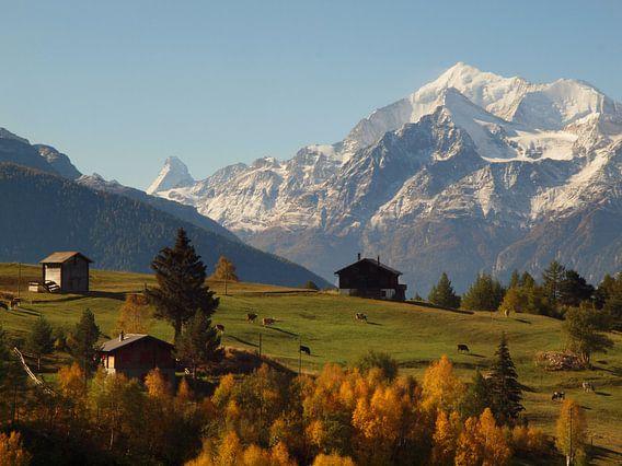 Blick auf Walliser Alpen von Visperterminen