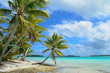 Hangende palmboom op een tropisch strand in de Stille Oceaan van