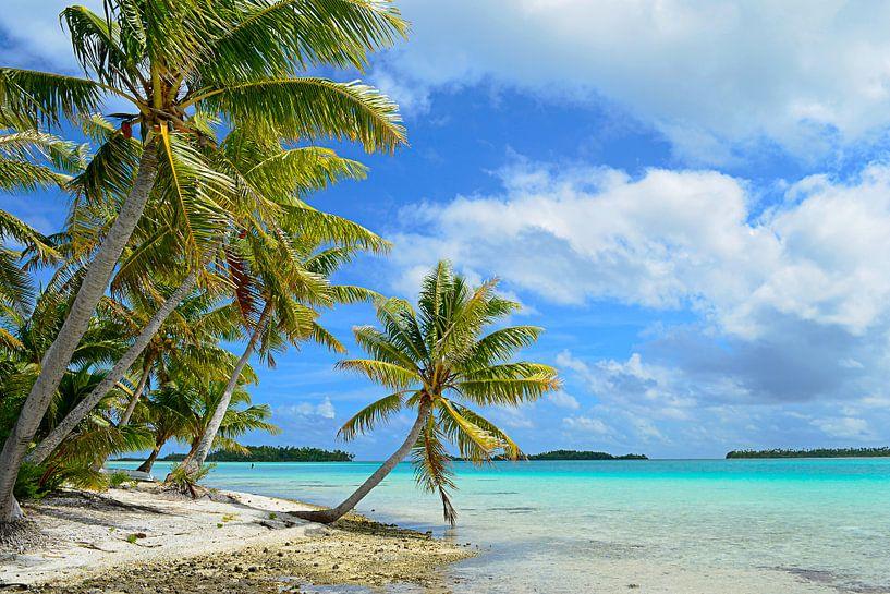 Hangende palmboom op een tropisch strand in de Stille Oceaan van iPics Photography