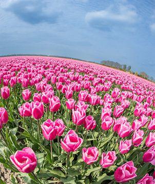 Tulpen am Sommertag von Peter de Jong