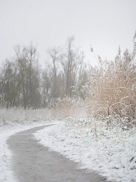 Wandelen door de sneeuw van Alvin Aarnoutse