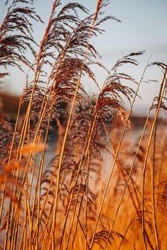 Goldene Stunde im Schilf bei Sonnenaufgang in Almere, Niederlande | Schneelandschaften im Winterhaus von Evelien Lodewijks