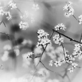 Rustgevend zwart wit bloesem van Wendy Tellier - Vastenhouw