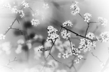 Beruhigende Schwarz-Weiß-Blüte von Wendy Tellier - Vastenhouw