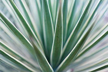 Grafische agave van Karel Ham