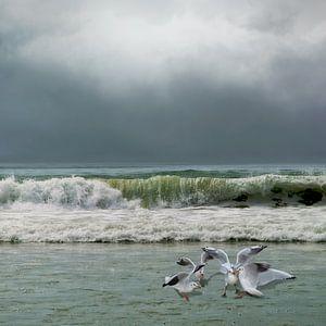 Eilandgevoel - zee - zeemeeuwen van