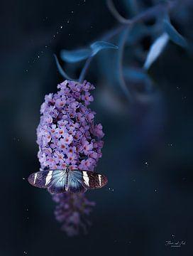 Sara Langflügelfalter auf einem Schmetterlingsbusch ( Buddleja davidii) von Flower and Art