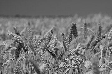 graanveld zwart-wit von Andre Jansen