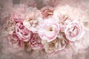 Rosenzeit