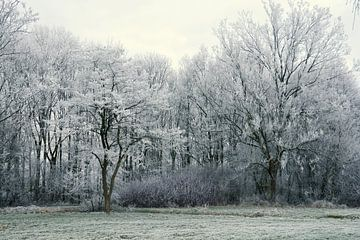 Winterlandschaft mit reifen Bäumen von Trinet Uzun