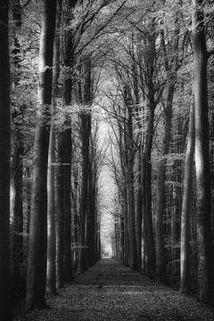 Im Wald von Rik Verslype