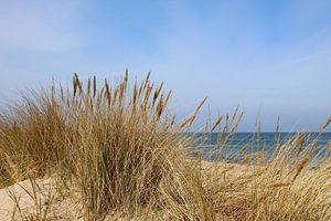Strandhafer im April