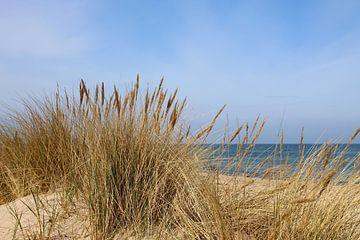 Strandhafer im April von Ostsee Bilder