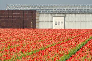 Rode tulpen in een strakke omlijsting von Remco Swiers