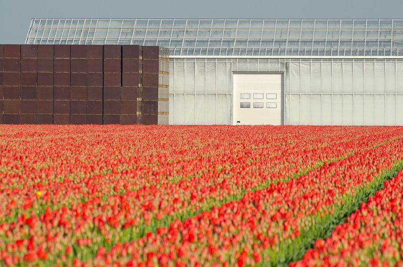 Red tulips and straight lines sur Remco Swiers