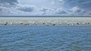 Zeehonden Waddenzee Terschelling van