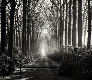 Sun rays in the forest von