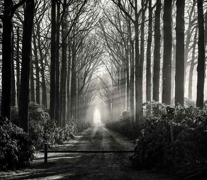 Mistig bospad Wijhe van Edwin Mooijaart