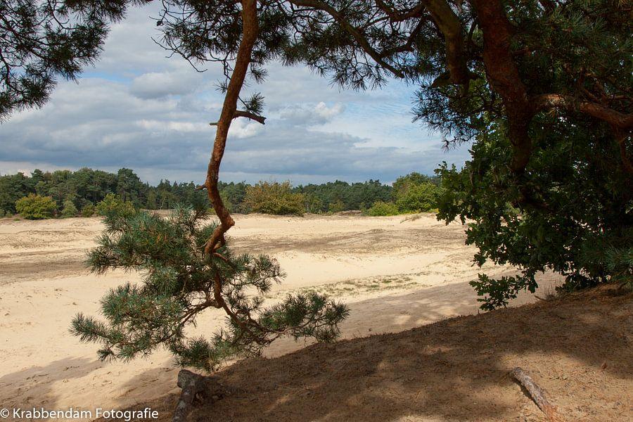 Naaldtak met zand van Maarten Krabbendam