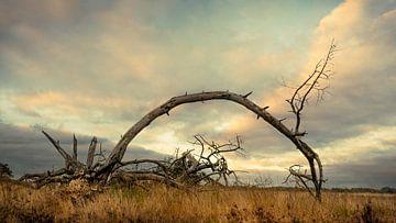 Landschaftsheide Achelse Kluis bei Leende von Kok and Kok