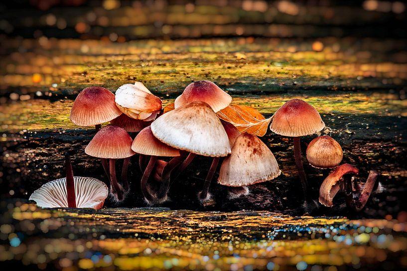 Herfst van Joost Lagerweij