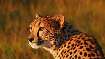 Gepard von Eye to Eye Xperience By Mris & Fred